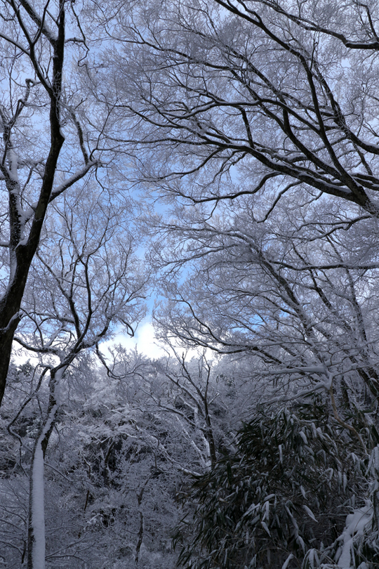 樹氷1l.jpg