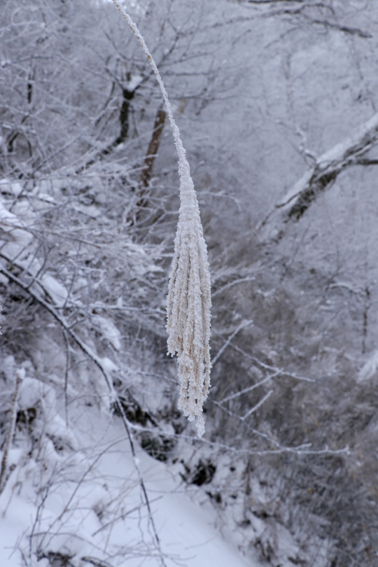 樹氷 ススキl.jpg