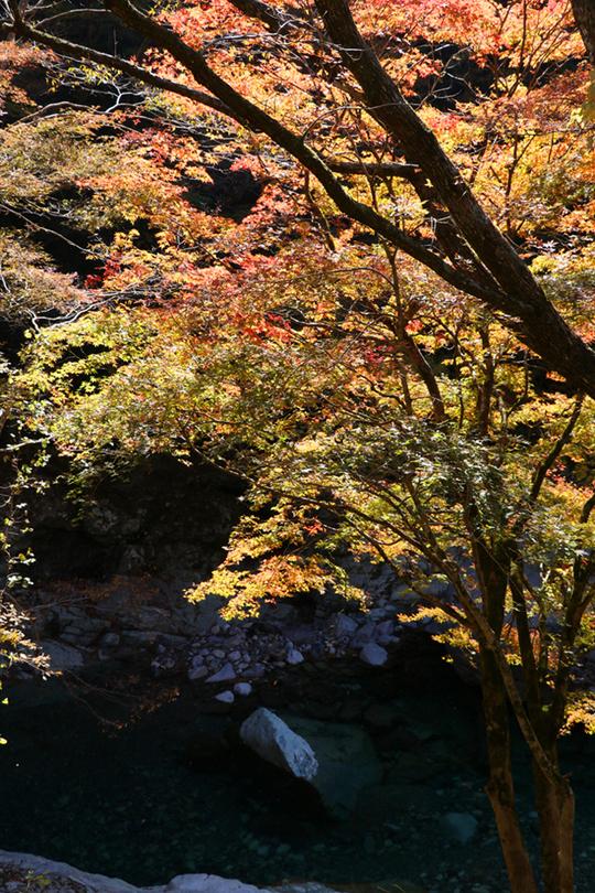 面河渓1-1l.jpg