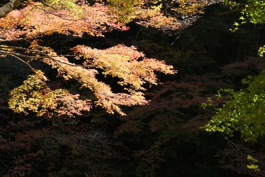 面河渓2-1l.jpg