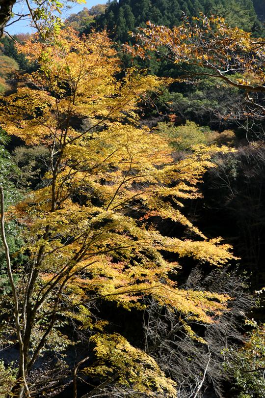 面河渓2-2l.jpg
